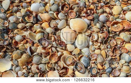 Seashells background. Many sea shells on a beach summer background. Small seashells and sand beach holiday background summer backdrop.