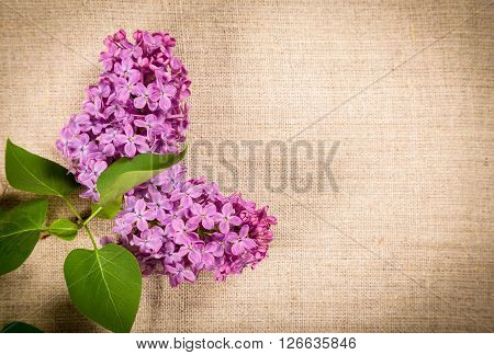 Bunch of lilac flowers on linen texture with empty space for text