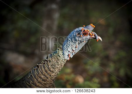 Colorful Wild Bird Close Up In Natural Habitat