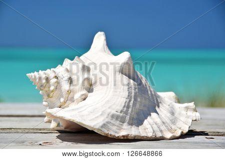 Shell against ocean