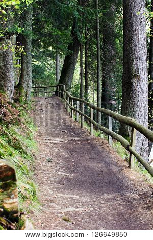 footpath fenced by a wooden fence in a pine forest