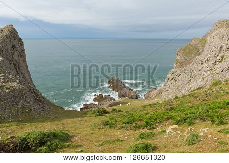 View of Mewslade bay with sheep The Gower coast Wales