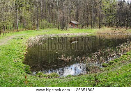 small pond with some reed in the forest with some trees and wooden shelter for tourists reflecting on its surface
