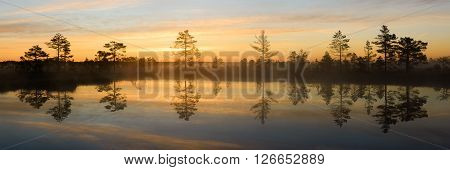 Bog pines by the lake with reflection in the water.