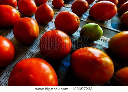 Fresh Farm Tomatoes Ripe and Ready To Eat