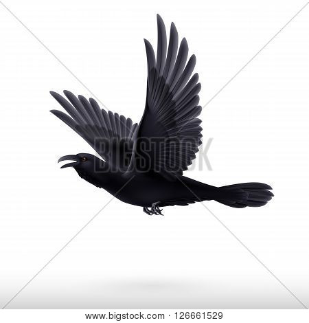 Flying black raven isolated on white background