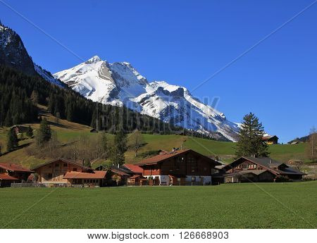 Snow covered Mt Oldenhorn and Swiss chalets on a green meadow. Spring scene in Gsteig bei Gstaad, Switzerland.