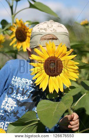 A little boy hiding behind a sunflower