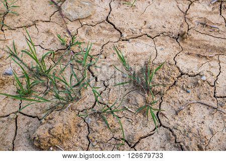 Few green grass pops from ground cracks