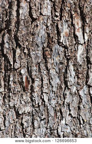 trunk texture