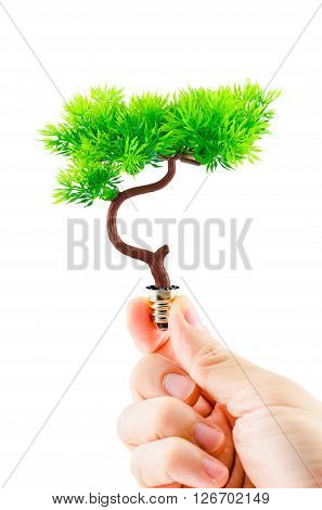 Hand Holding Tree Growing On Light Bulb On White Background