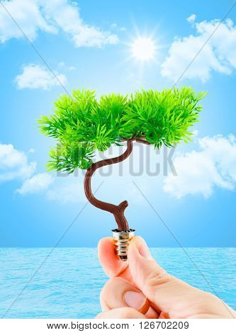 Hand Holding Tree Growing On Light Bulb With Sun Burst And Light Blue Sky With Cloud And Water,eco C
