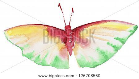Abstract Watercolor hand drawn colorfyl butterfly. Hand painted watercolor butterfly in Hires.