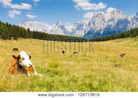 Beautiful alpine panorama group Pala of dolomites from Calaita lake meadows Italian landscape