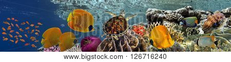 Coral reef underwater panorama with school of colorful tropical fish Red Sea