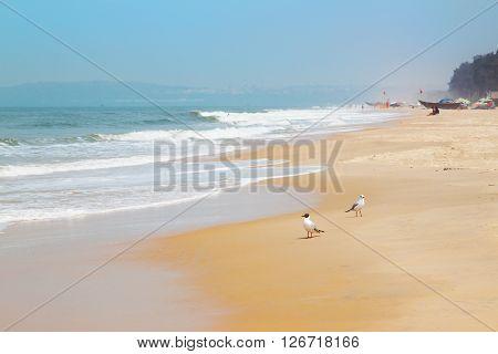 Kolva, India - April 20, 2016: Blurry GOA landscape with sea, waves and birds
