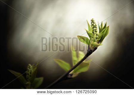 Dissolve Kidney Pears. Spring