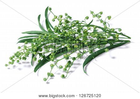 Flowering Tarragon (artemisia Dracunculus)