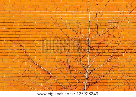 spring bush of a branchy tree against a red brick wall and a blank space for the text