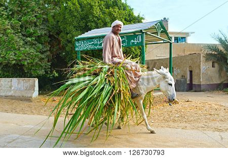 NAJ' AT TUNAB EGYPT - OCTOBER 6 2014: The farmer rides on the donkey loaded with the bunch of the sugarcane on October 6 in Naj' At Tunab.