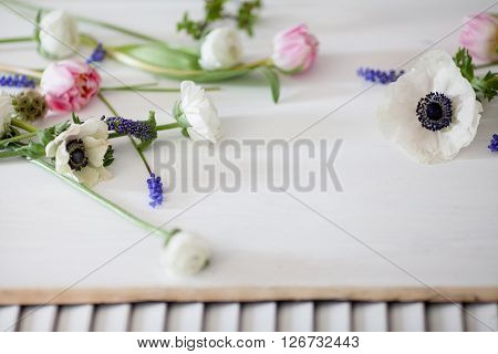 White anemones pink tulips white buttercups and grape hyacinths lying on the white wood and shutters