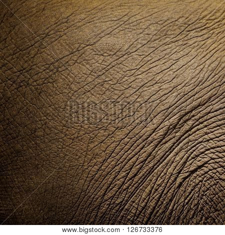texture of elephant skin.