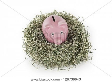 Old piggy bank in shredded dollar nest.
