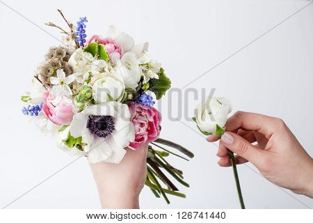 Two hands making bouquet from pink tulips violet grape hyacinths white anemones violet veronica and white buttercup on white background