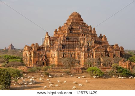 Dhammayangyi temple The biggest Temple in Bagan Myanmar