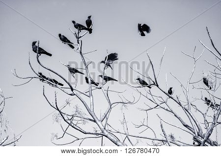 Black Crow on bare branches against the sky