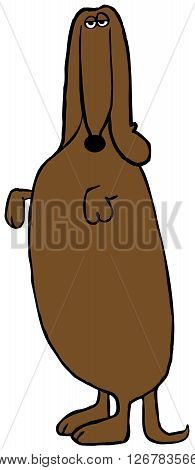Illustration depicting a brown Dachshund standing on its hind legs.