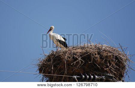 Nallihan Bird Paradise's lonely stork on the nest