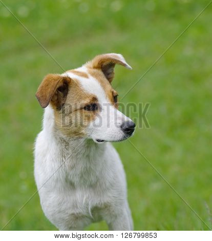 Portrait of adorable young dog at spring season