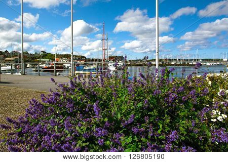 View of bay of morning in a small Swedish town Sweden. Salvia foreground