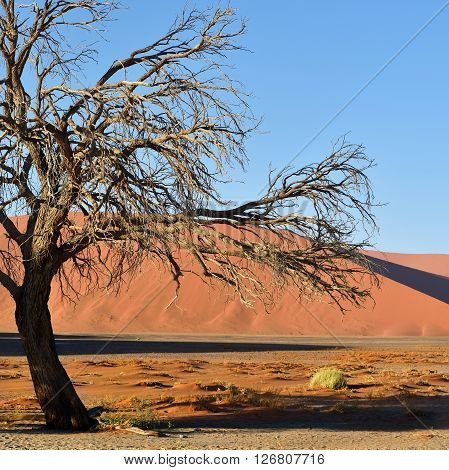 Beautiful landscape with red dunes and dead tree at sunrise Sossusvlei Namib Naukluft National Park Namibia