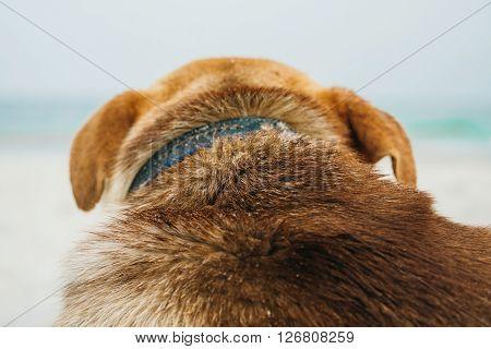 Dog Looking At The Sea