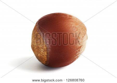 One dried hazelnut isolated on the white background. Macro.