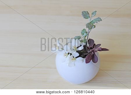 Sprigs of blue spruce and barberry with poplar in a white ceramic vase