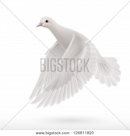 Realistic white dove on white background as symbol of peace