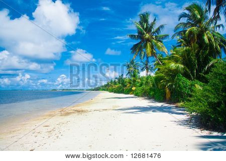 jungle on a beach