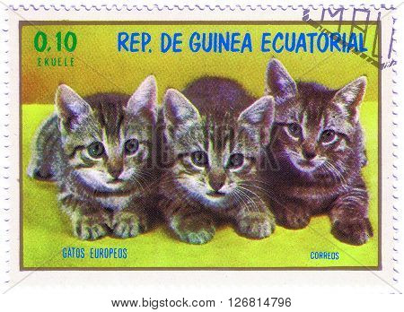 EQUATORIAL GUINEA - CIRCA 1974: stamp printed by Equatorial Guinea shows three kitten kitty circa 1974