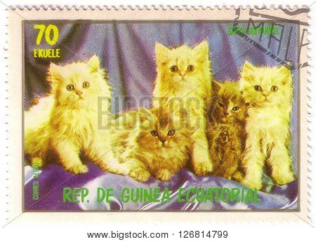EQUATORIAL GUINEA - CIRCA 1974: stamp printed by Equatorial Guinea shows cat kitten kitty circa 1974