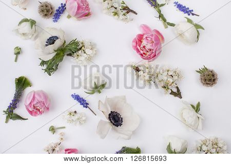 Heads of flowers : white anemones; pink tulips; white buttercups; violet veronica; blossom plum grape hyacinths on white background