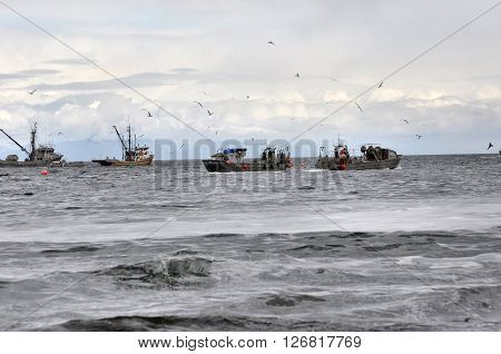 Boats fishing for herring with gulls flying overhead.