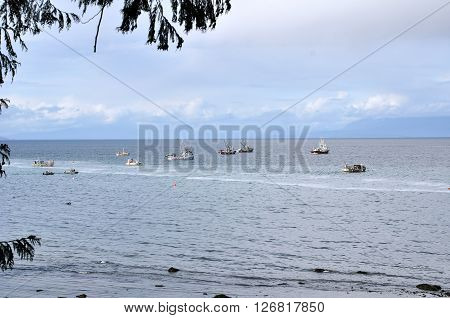 Boats fishing for herring in the ocean, with blue sky and clouds in the background.