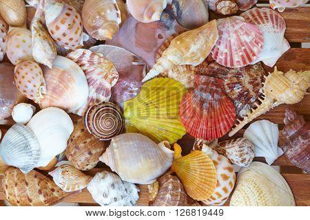 different shells