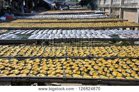 Sun Drying Fish