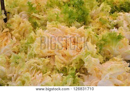 Endive (cichorium Endivia) Salad Vegetables