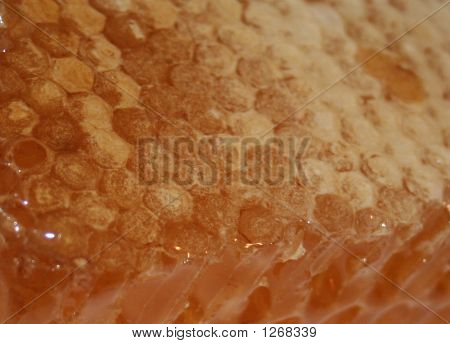 Close Up Of Honey Comb