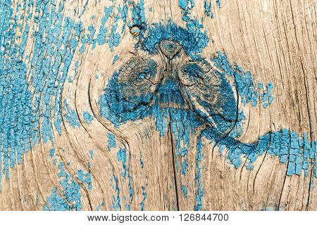 Old Blue Paint And Wood Knot